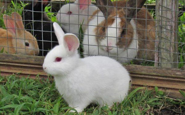 Best Outdoor Rabbit Hutches of July 2020