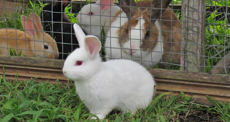 Best Outdoor Rabbit Hutches of April 2021
